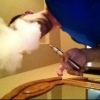 Proven - Nicotine NOT the a... - last post by charles vapor