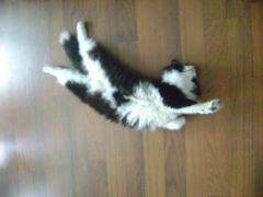 Peppa the cat.jpg